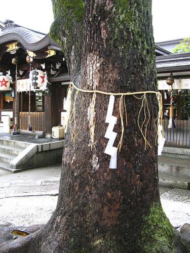 晴明神社 ご神木
